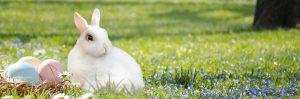 stanze libere per Pasqua